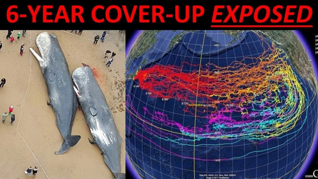 Fukushima Nuclear Meltdown COVERED UP! Radiation HIGHEST EVER RECORDED! 300 TONS into Pacific DAILY